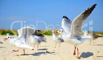 flock of white sea gulls on the sandy beach