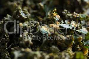 Full frame shot of kale