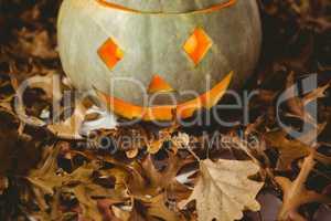 Illuminated jack o lanterns with autumn leaves