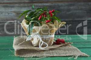 Chilli plant in jar