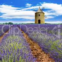 Moody lavender field in southern France