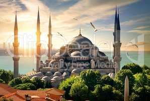 Seagulls over Blue Mosque