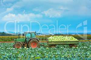 tractor with trailer full of cabbage