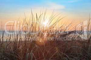 Dune grass in the sunrise at the beach