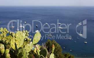 Cactus plant overlooks the sea in Sicily
