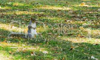 squirrel waiting in a park in autumn