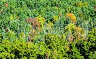 Dense green forest starting to turn to autumn colors.