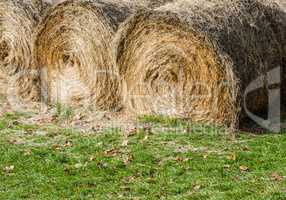 Large round hay bales on grass.