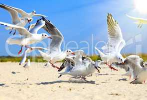 flock of sea gulls flying