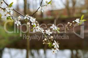 spring, branch, white, tree, flower, leaf, insect, floral, awakening, blossom, springtime