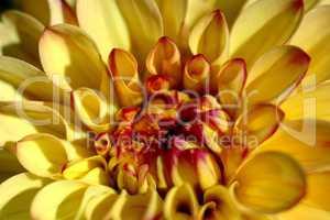 macro sur une fleur