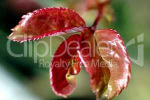 feuilles aux couleurs de l'automne