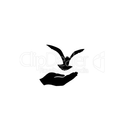 Dove bird free with hand. Pigeon flying. Peace symbol. Freedom