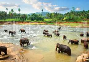 Elephants in water in the afternoon