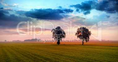 grass field with tree