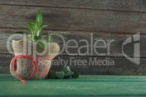 Basil plant in jar