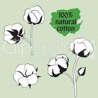 Cotton set. Natural material sign. Drawing Flower cotton.