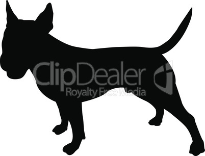 American bull terrier stands in a rack, black silhouette on white isolated background