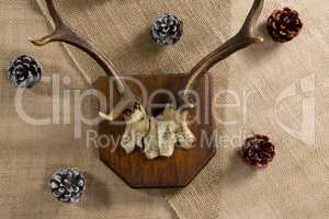Reindeer thorn surrounded with pine cone