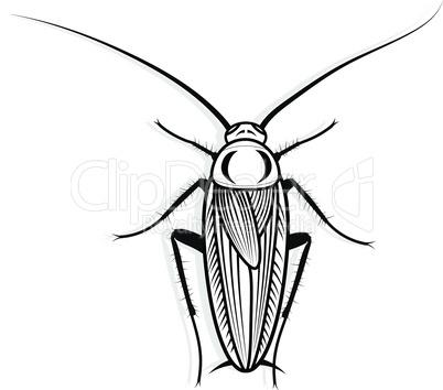 Cockroach vector design vector animal illustration for t-shirt. Sketch tattoo design.
