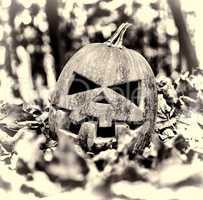 Halloween. halloween