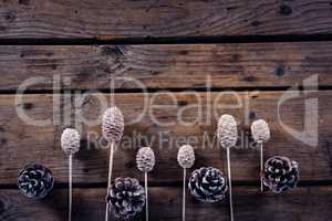 Dry pine cone stick and pine cone arranged on wooden plank