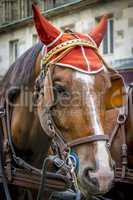 Horse head close up.