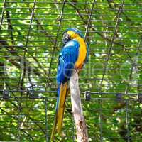 parrot ara in the zoo