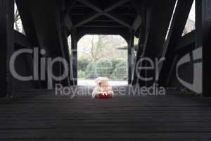 Stuffed bear toy and gift on a bridge