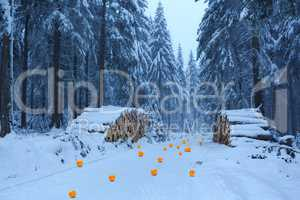 Wintry forest and oranges