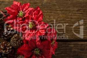 Close up of poinsettia flowers on artificial nest