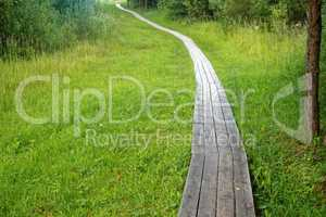path with boards in the summer in Russia