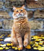 red cat sitting in the middle of yellow foliage