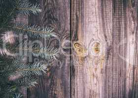 wood background with green spruce branch