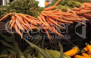 Orange carrots grown and harvested in Southern California