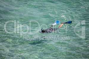 Snorkeling diver looking for fish in the warm waters