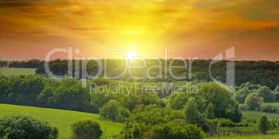 Green fields and bright sunrise. Wide photo. Agricultural landsc