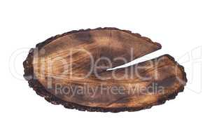 cut tree trunk isolated on white background