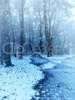 Winter scene beech forest