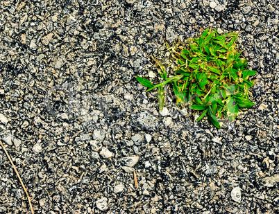Surviving plants.