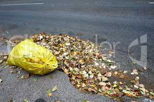 yellow garbage bags filled with fallen leaves, cleaning the stre
