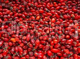 the rose-hip fruit tea, collect medicinal rose hips in autumn, r