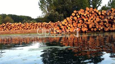 Wood logs by the river