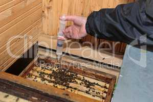 Winterbehandlung eines Bienenstocks, beträufeln mit Oxalsäure gegen Milben