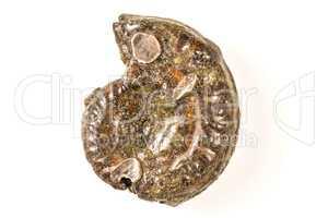 Ammonit, Nahaufnahme, pyritisiert