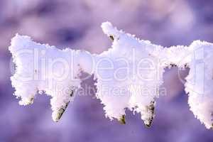 Zweig mit Schneehaube