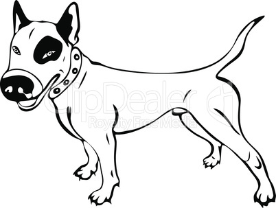 hand-painted white English bull terrier dog