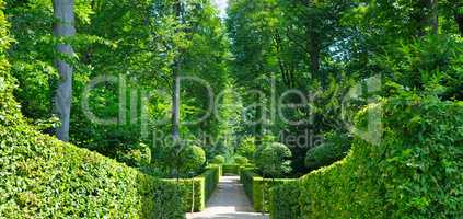 Summer park with hedges and alleys. Cozy garden for hiking.