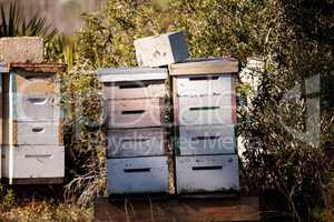 Stacks of langstroth bee hives with honeybees flying