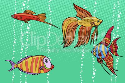 Set collection of aquarium fish